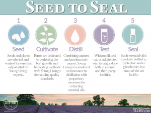 Seed to Seal - How it works!